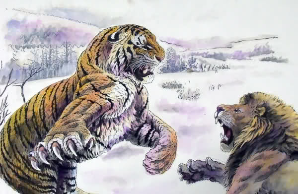 Tiger vs Lion