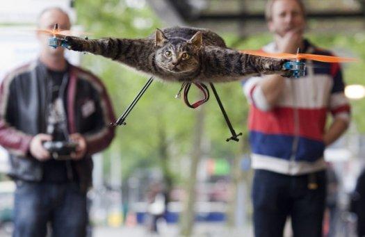 orville cat