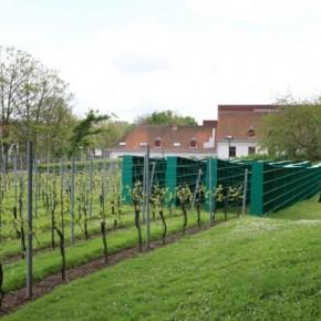 vineyard library