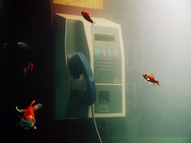 festival lampu ghent belgia akuarium