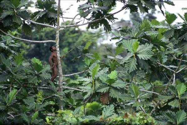 rumah pohon korowai papua 2