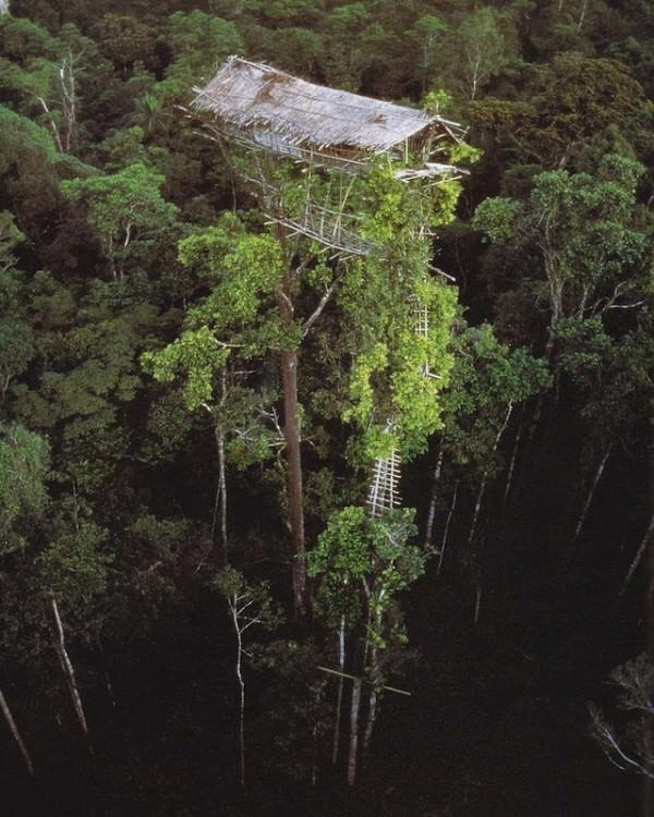 rumah pohon korowai papua 3