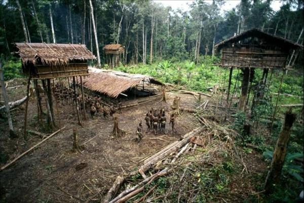 rumah pohon korowai papua 5