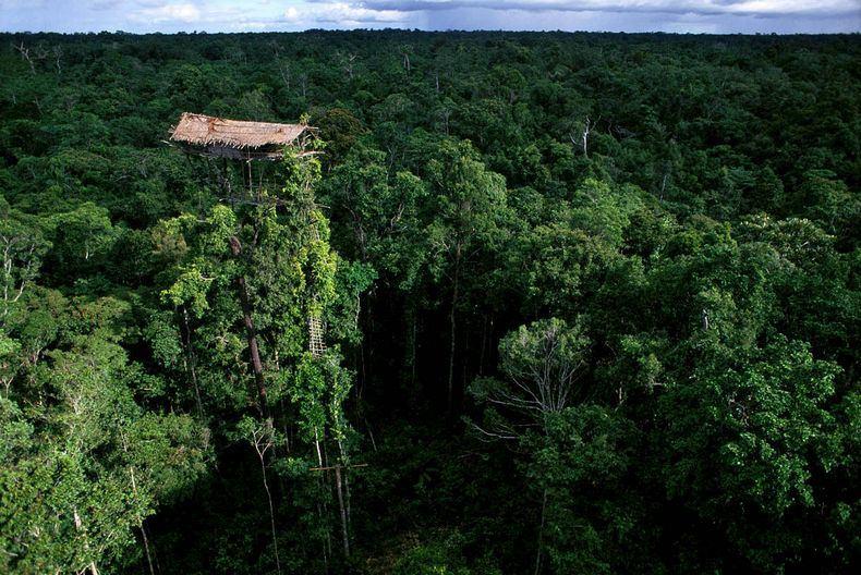 rumah pohon korowai papua 6