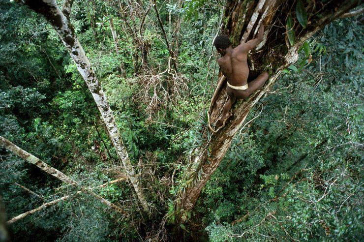 rumah pohon korowai papua 7