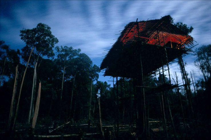 rumah pohon korowai papua 8