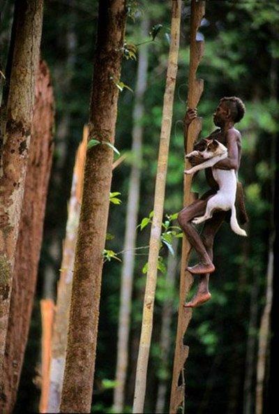 rumah pohon korowai papua