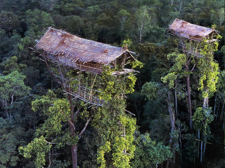 rumah pohon korowai papua 10
