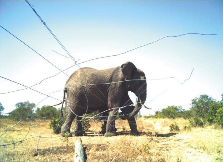 Elephant barrier by Lauren Evans, Kenya