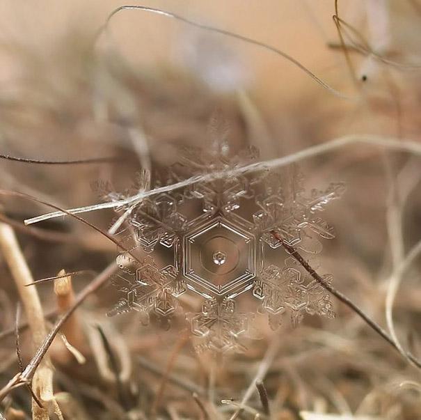 Foto Keping Salju oleh Andrew Osokin (1)