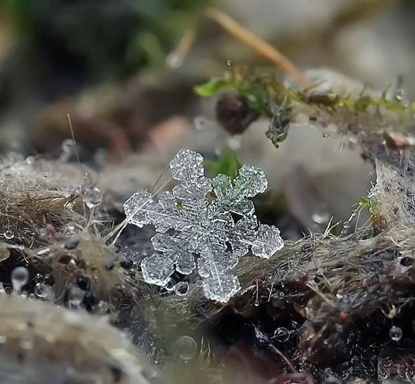Foto Keping Salju oleh Andrew Osokin (2)