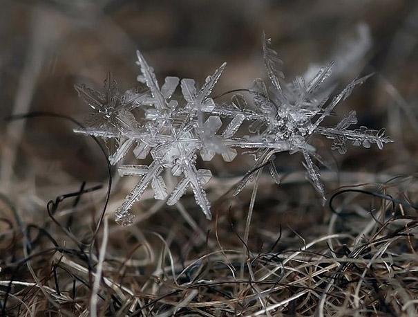 Foto Keping Salju oleh Andrew Osokin (3)
