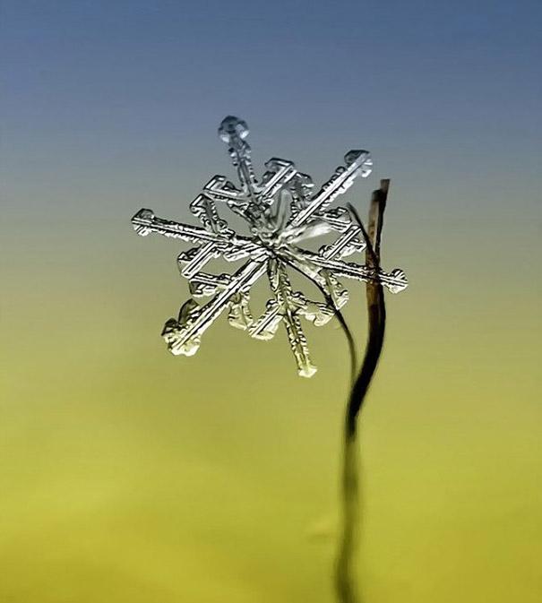 Foto Keping Salju oleh Andrew Osokin (6)