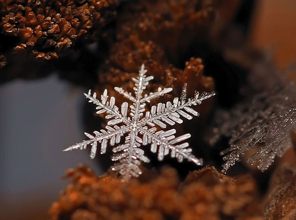 Foto Keping Salju oleh Andrew Osokin (8)
