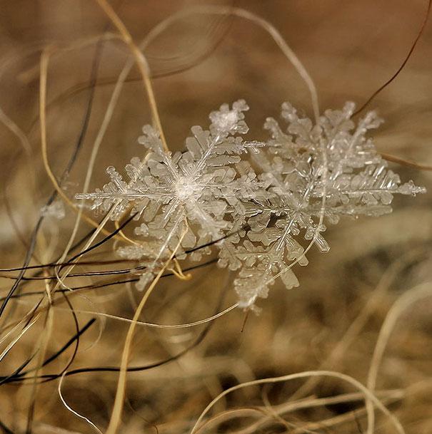 Foto Keping Salju oleh Andrew Osokin (10)