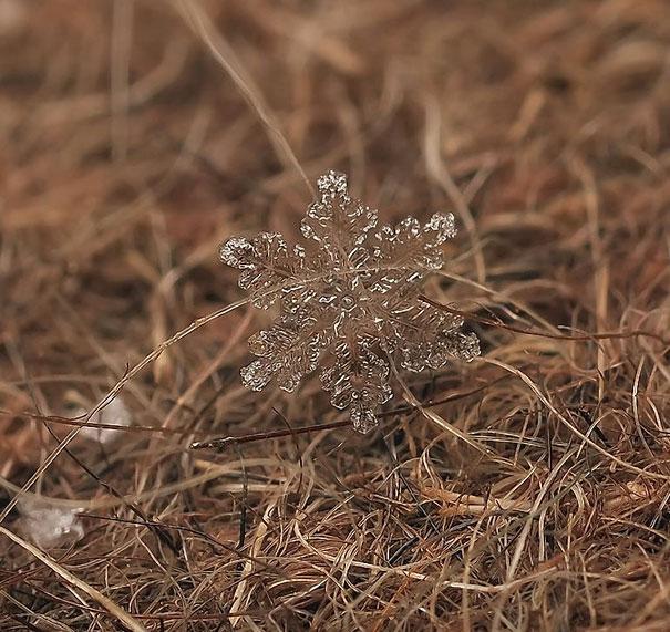 Foto Keping Salju oleh Andrew Osokin (12)