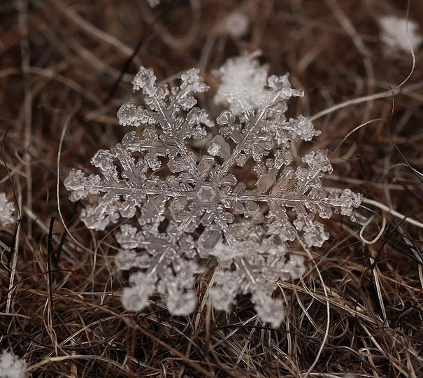 Foto Keping Salju oleh Andrew Osokin (13)