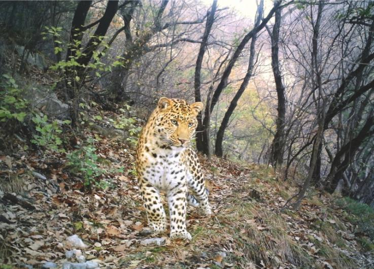 Leopard path by Zhou Zhefeng, China