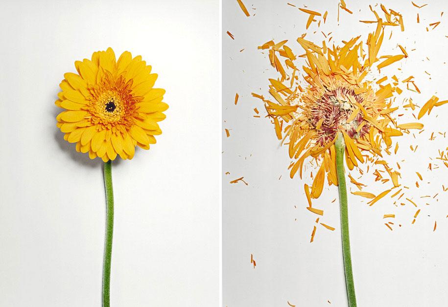 Bunga-bunga Pecah 1