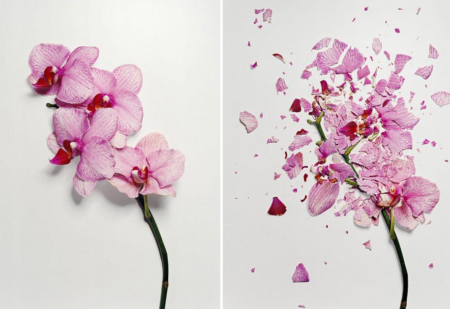 Bunga-bunga Pecah 2