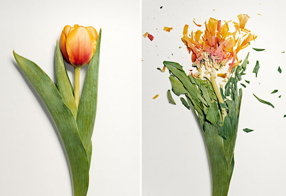Bunga-bunga Pecah 6