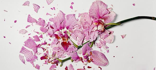 Bunga-bunga Pecah