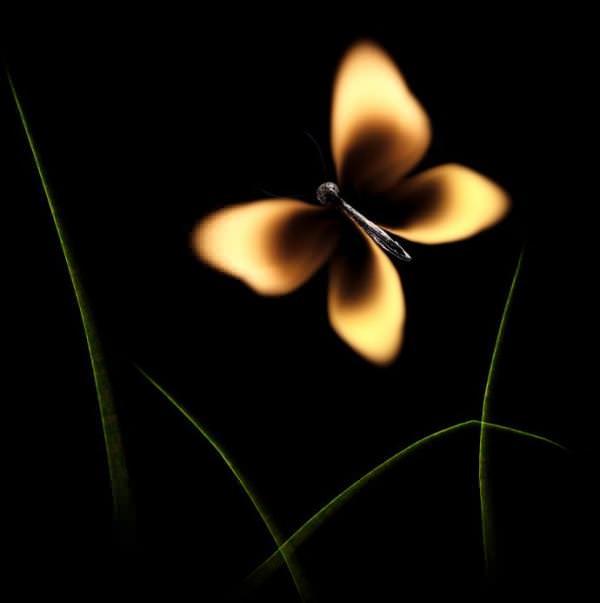 fotografi hewan dari korek api 3
