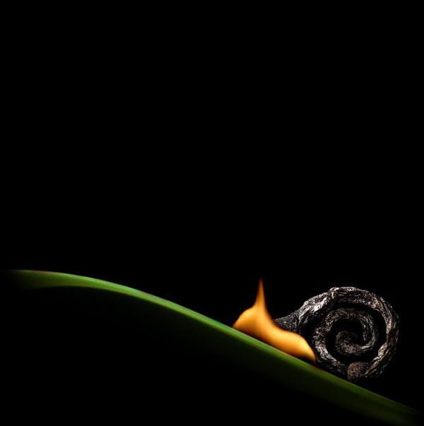 fotografi hewan dari korek api 2