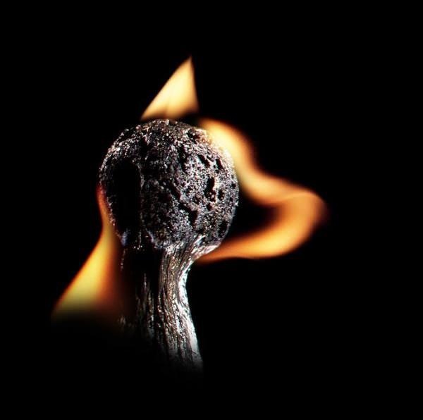 fotografi hewan dari korek api 6