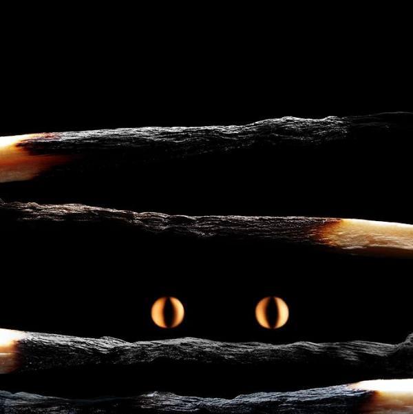 fotografi hewan dari korek api 8