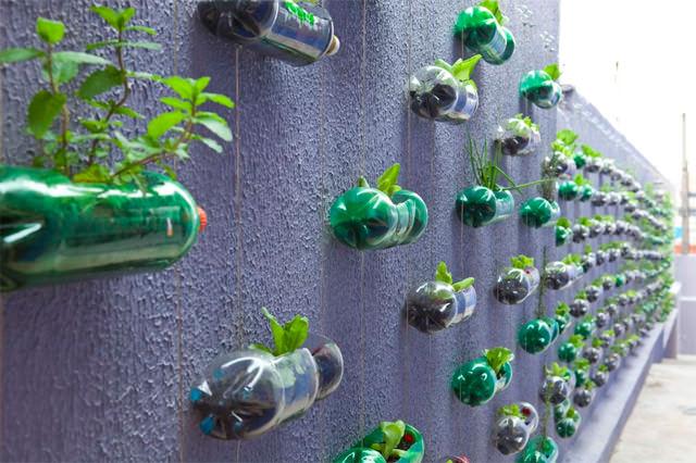 tanaman vertikal botol bekas 4