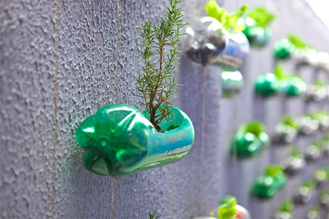 tanaman vertikal botol bekas 6