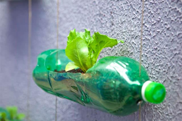 tanaman vertikal botol bekas 7