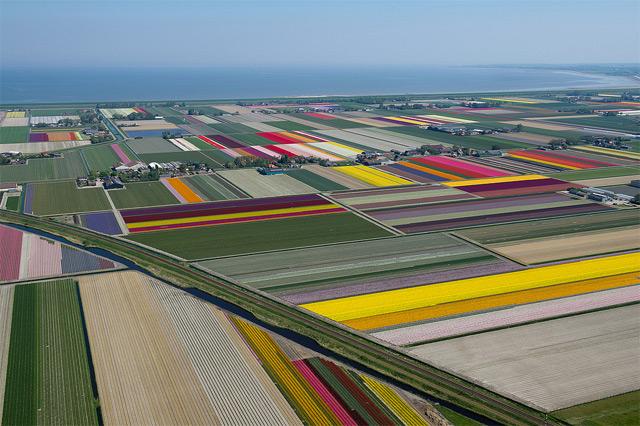 taman bunga tulip belanda 11