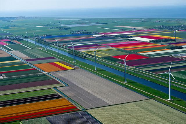 taman bunga tulip belanda 13
