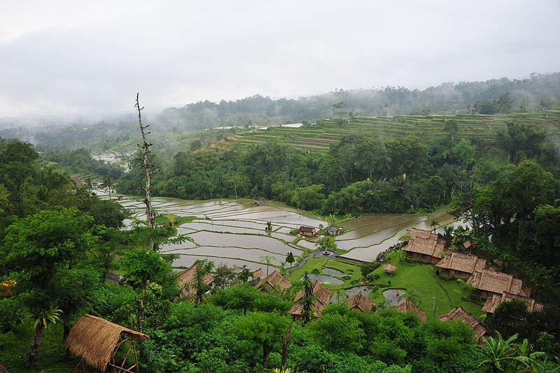 Subak Bali 2