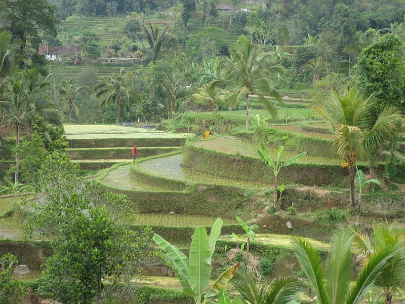 Subak Bali 3
