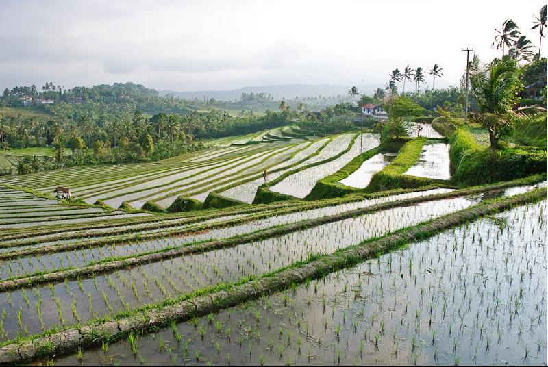Subak Bali 4