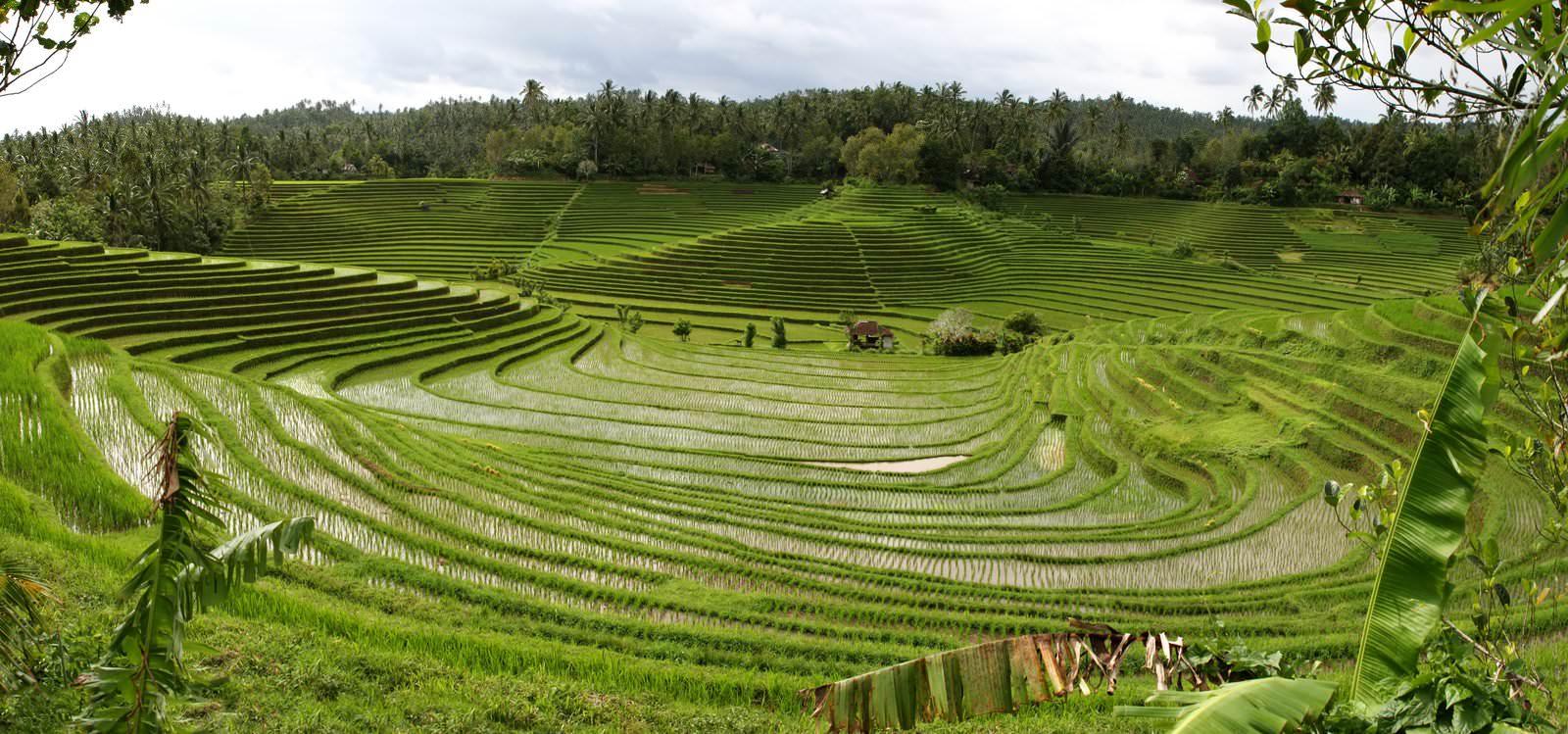 Subak Bali 5