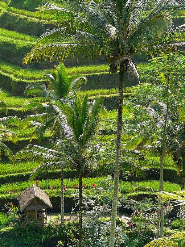 Subak Bali 6