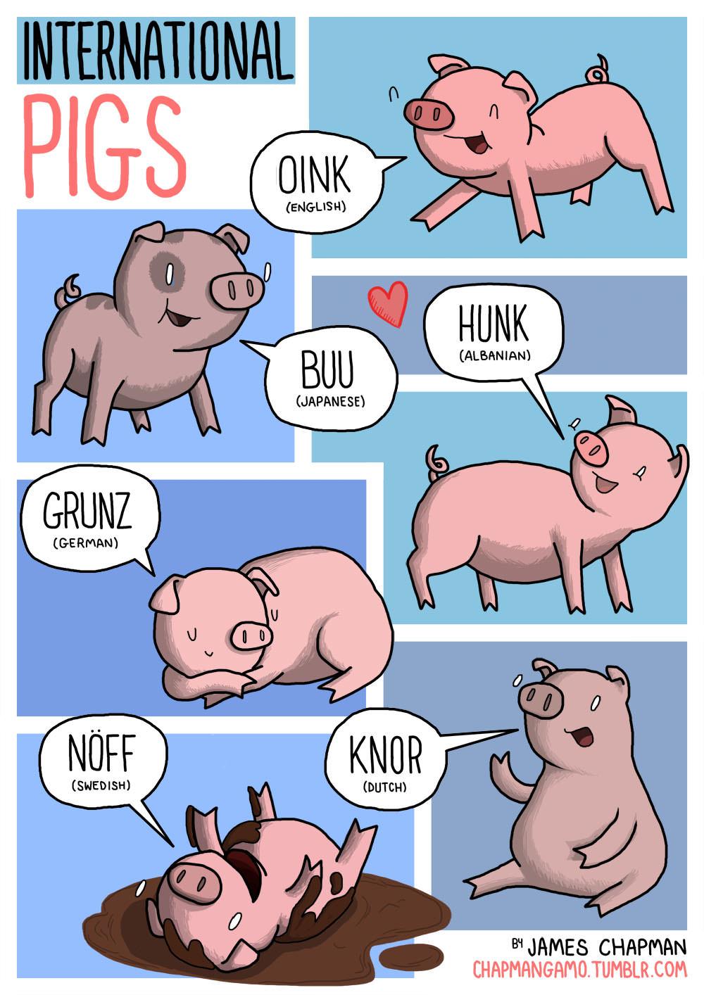 Lucu Suara Binatang Dalam Berbagai Bahasa Ini Blognya Eika Vio