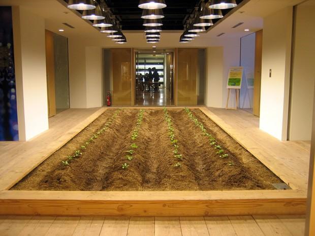 arsitektur pertanian ramah lingkungan pasona jepang 4