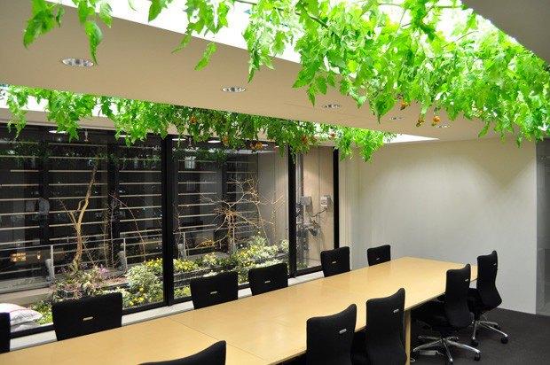 arsitektur pertanian ramah lingkungan pasona jepang 5
