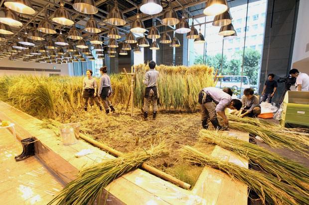 arsitektur pertanian ramah lingkungan pasona jepang 6