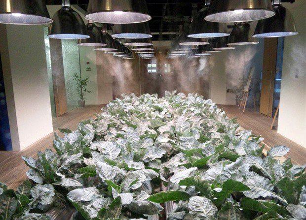 arsitektur pertanian ramah lingkungan pasona jepang 9