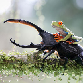 Ulasan Singkat dari Sony World Photography Awards 2014